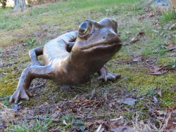 Shenandoah Salamander